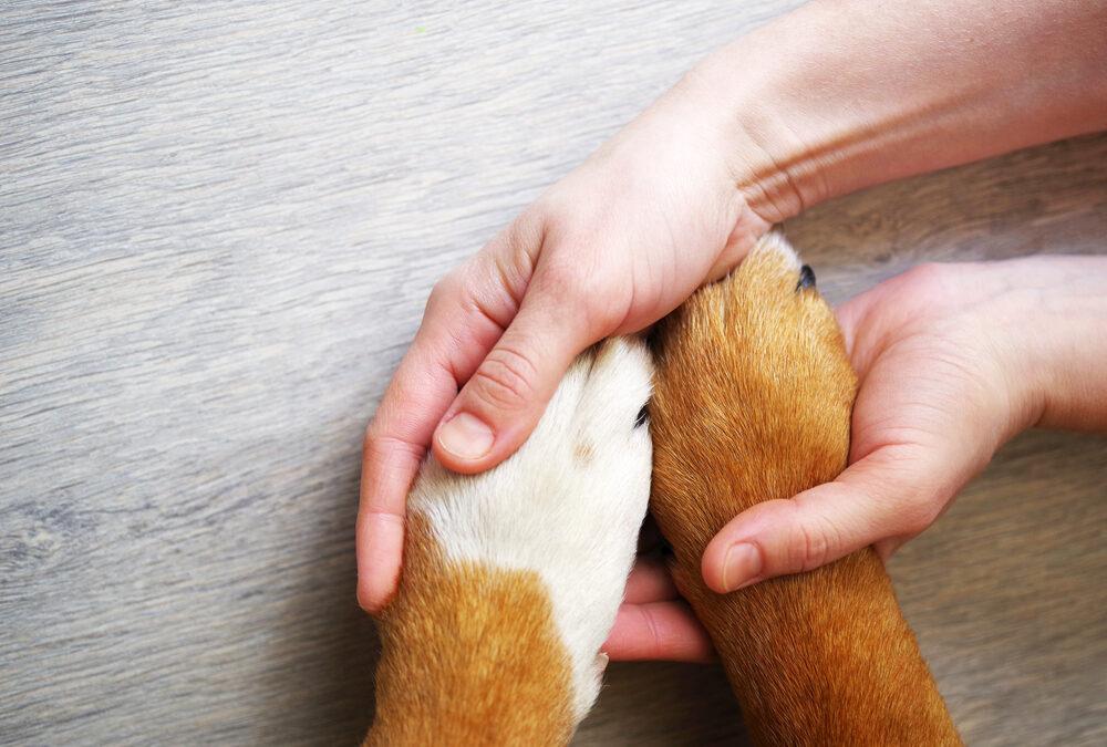 Mutuelle pour animaux: Notre avis sur l'assurance Anim'Optimum en 2021