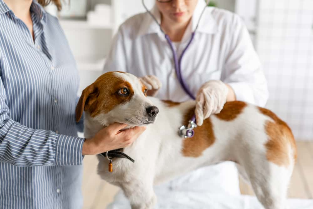 Mutuelle pour animaux: Notre avis sur l'assurance Mon Compagnon